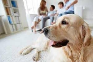 Animal de compagnie, famille et bienvenue pour animaux de compagnie!